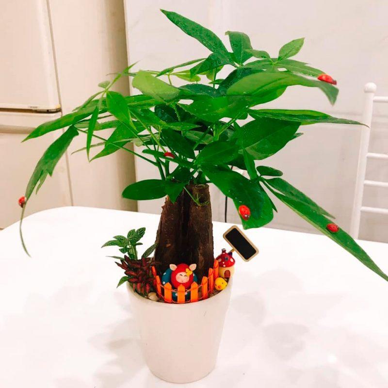Cây Kim Ngân, cây phong thủy thích hợp trồng trong văn phòng