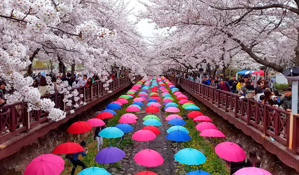 Lễ hội ngắm hoa anh đào, một trong những lễ hội cuốn hút người xem