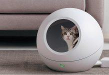 Top 3 nhà vệ sinh cho mèo tốt nhất hiện nay