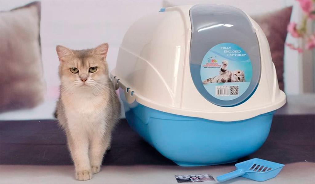 Nhà vẹ sinh kín cho mèo