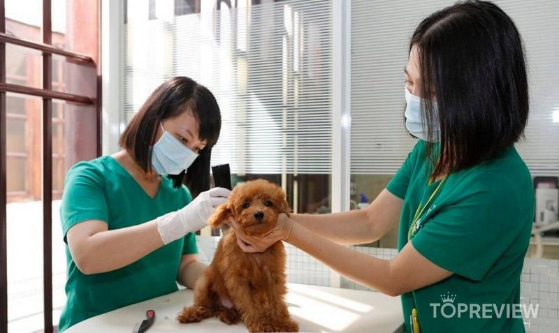Happy-Pet-Care-dv-cham-soc-thu-cung-quận-5