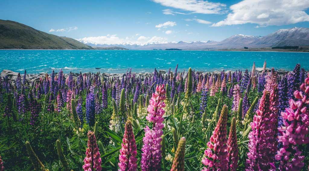 New Zealand xứ sở kiwi
