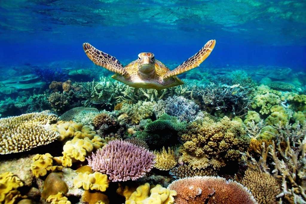 Sinh vật phong phú tại Côn Đảo Top 5 địa điểm lặn biển đẹp nhất tại Việt Nam.