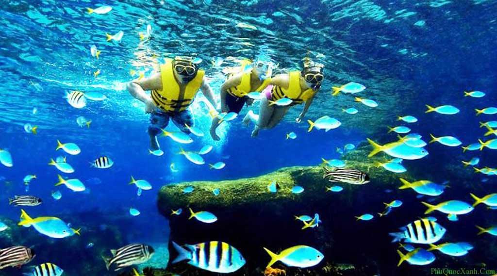 Top 5 địa điểm lặn biển đẹp nhất tại Việt Nam.