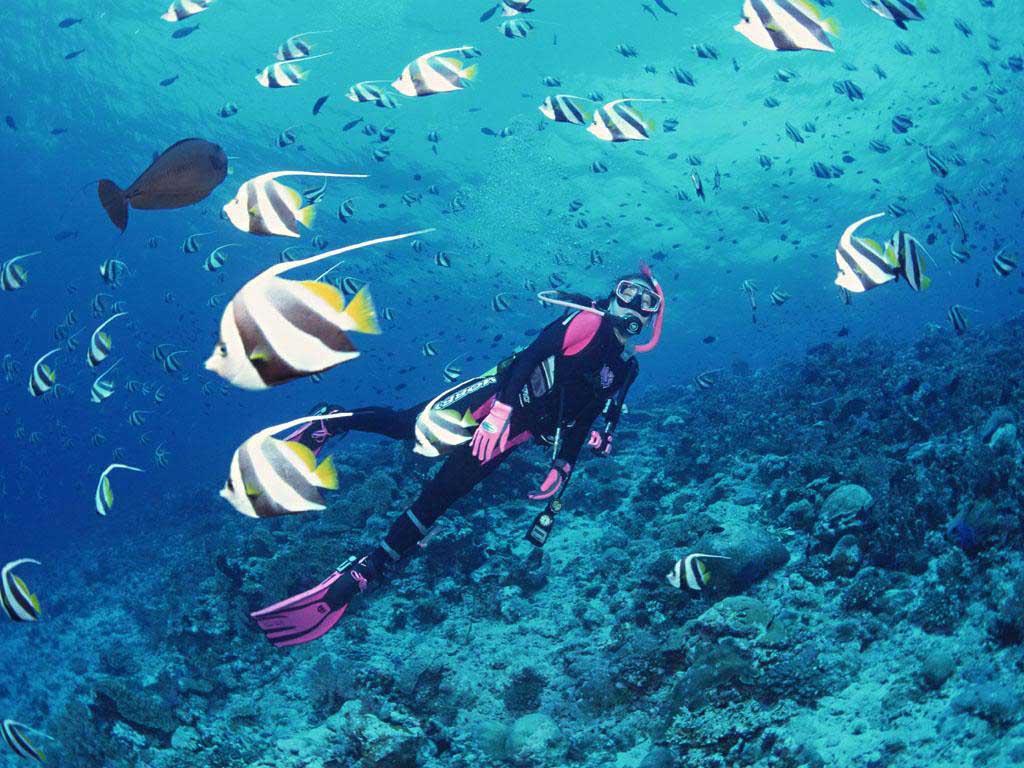 Chiêm ngưỡng vẻ đẹp bí ẩn tại Biển Nha Trang Top 5 địa điểm lặn biển đẹp nhất tại Việt Nam.