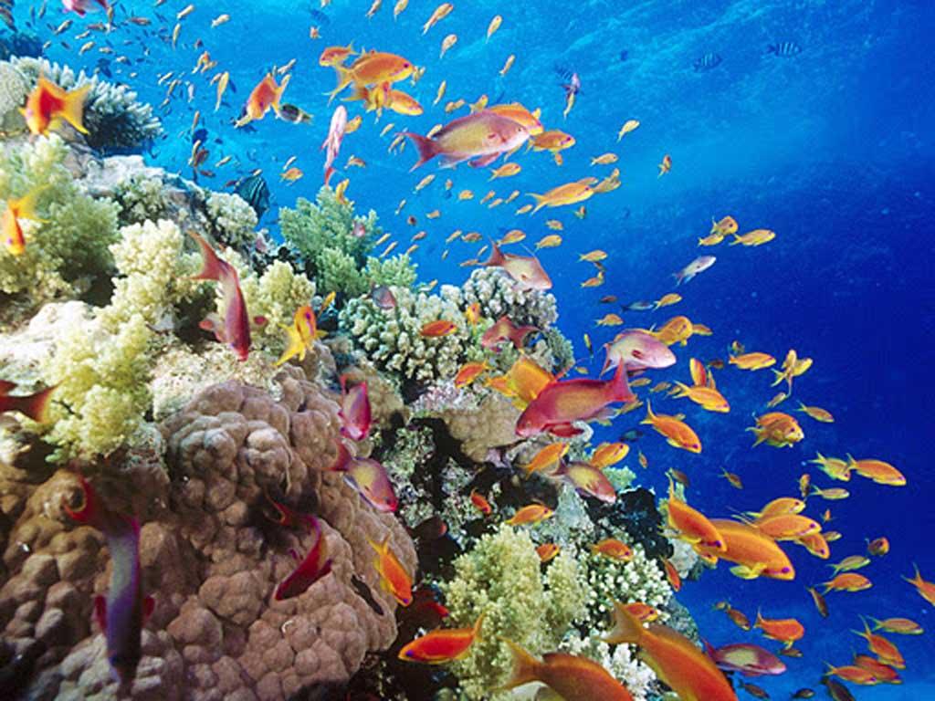 Thế giới dưới lòng biển - Vịnh Vĩnh Hy