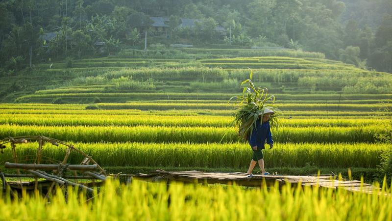 Khung cảnh yên bình ở Pù Luông