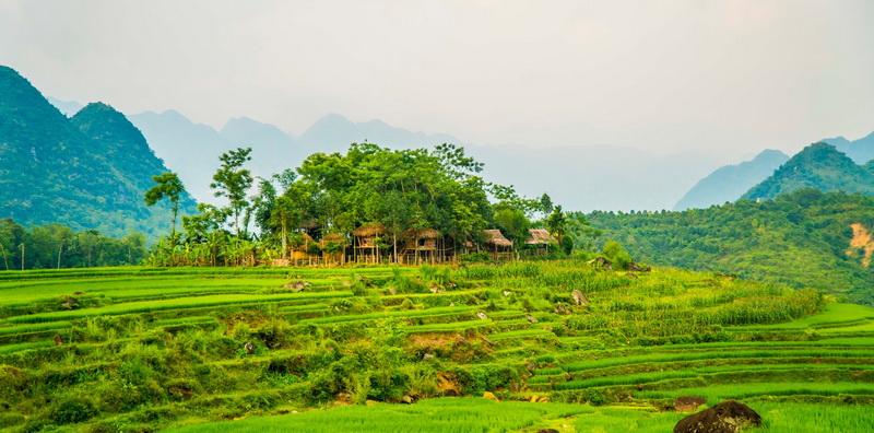 Homestay Pù Luông treehouse