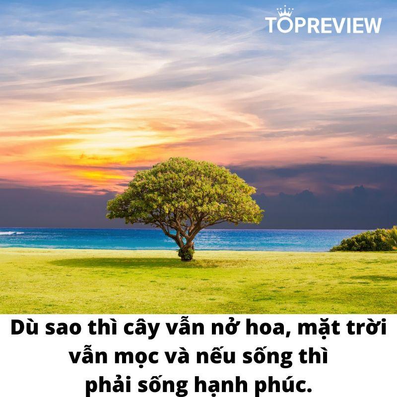 """""""Dù sao thì cây cũng nở hoa, mặt trời vẫn mọc và nếu sống thì phải sống hạnh phúc."""" – trích Đừng tháo nụ cười xuống"""