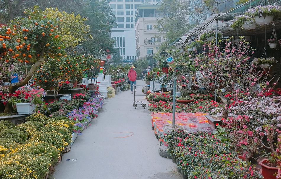 Đi chợ hoa ngày Tết cũng đã trở thành một phong tục của người Việt
