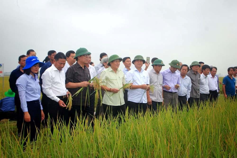 Nước ta luôn chú trọng vào việc phát triển nông nghiệp