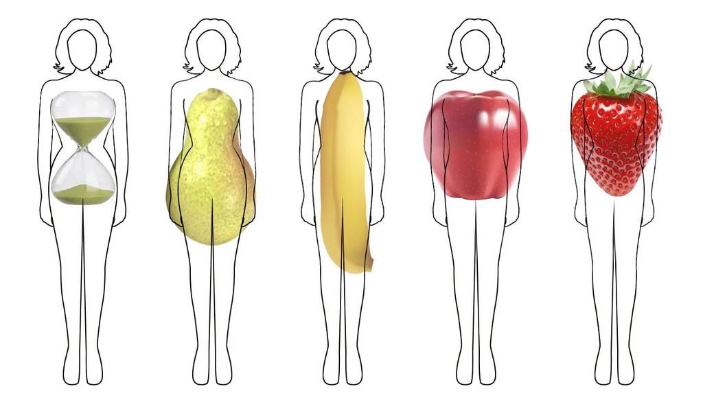 Có 5 mẫu thân hình cơ bản Đó là: quả táo, quả lê, quả chuối, quả dâu và đồng hồ cát.