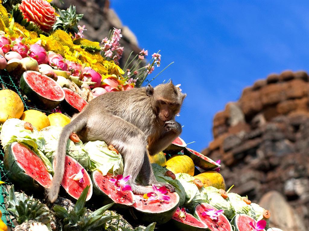 Lễ hội dành cho bầy khỉ