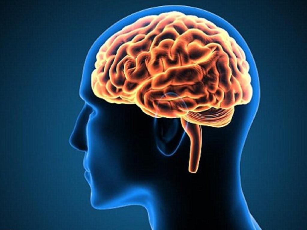 Não bộ là cơ quan quan trọng của con người