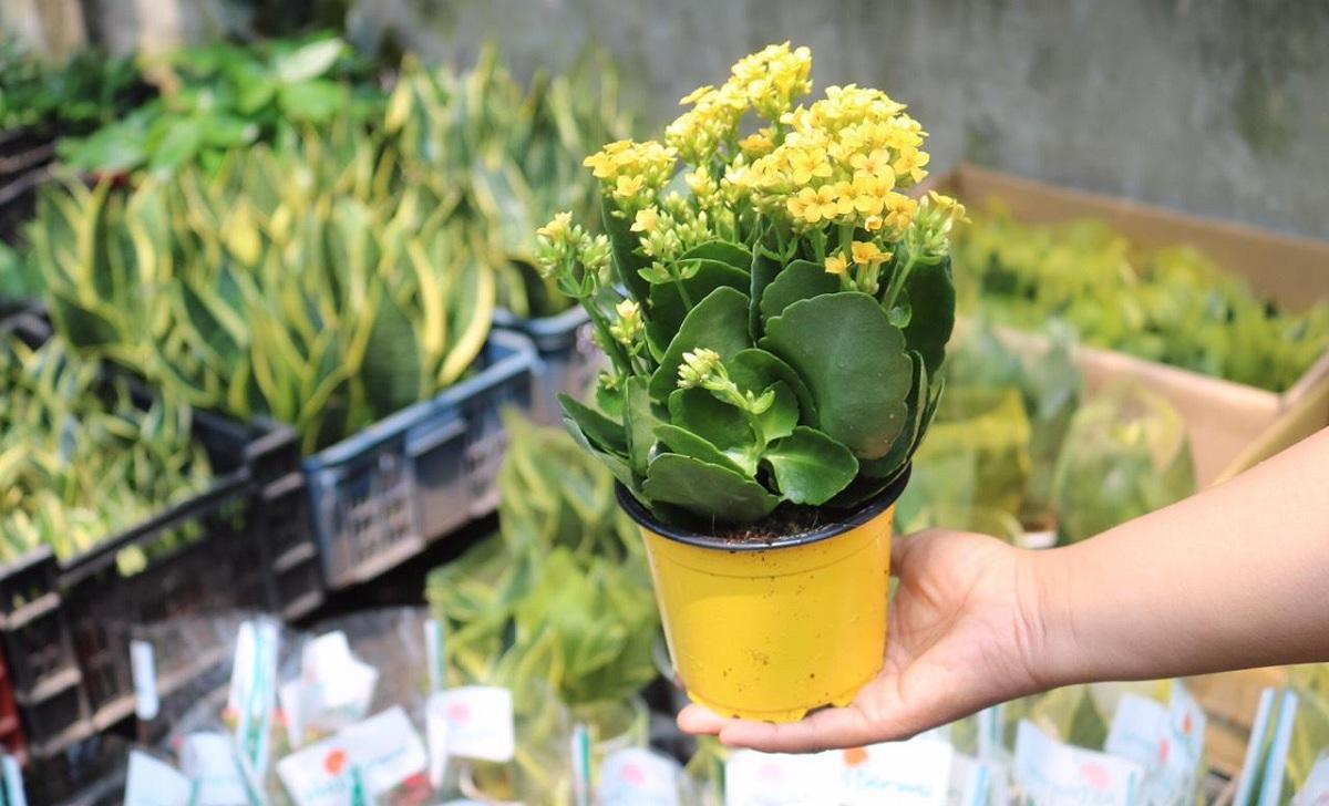 Cây sống đời - Cây trồng trong nhà tốt cho sức khỏe