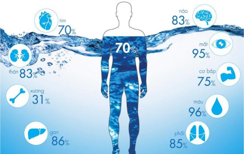 Theo nghiên cứu khác từ các nhà khoa học, lượng nước chiếm đến 75% trọng lượng của cơ thể, chúng được phân bố ở khắp nơi, và sẽ tham gia vào tất cả các quá trình diễn ra trong cơ thể