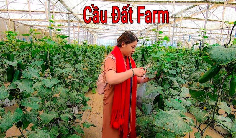 Mô hình trồng rau tại Cầu Đất Farm