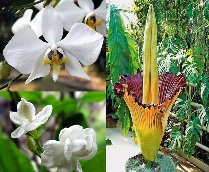 Quốc hoa Indonesia