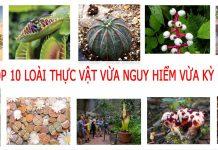 Top 10 loài thực vật vừa nguy hiểm vừa kỳ lạ còn tồn tại trên thế giới