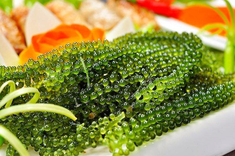 Rong nho biển được ví như trứng cá muối xanh.