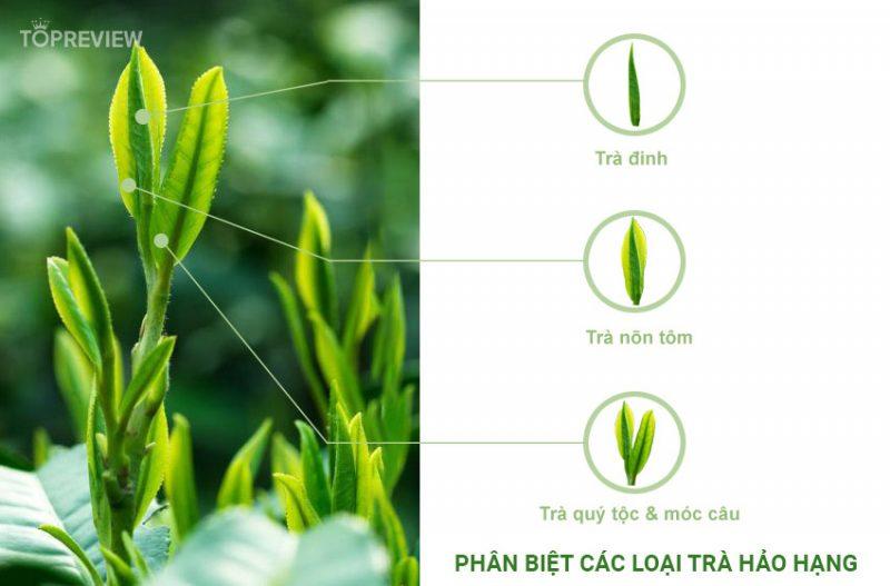 Cách phân biệt Trà Đinh Nõn Thái Nguyên và các loại trà Tân Cương thượng hạng khác