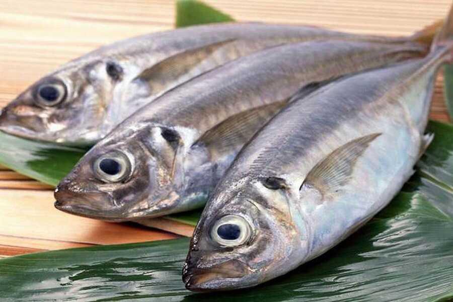 Cá biển chứa nhiều Omega – 3 rất tốt cho tái tạo xương khớp